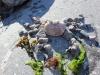 stone-crab-6c254a98d3bebc5790120406662953250f236f76