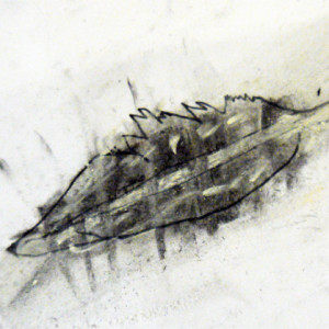 Drawing feathers