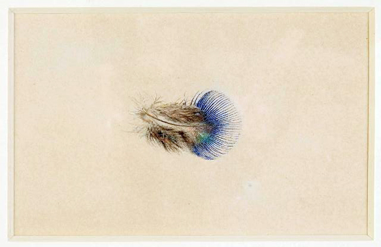 Drawing Feathers. Peacock Feather by John Ruskin. Collection of the Guild of St George, Museums Sheffield