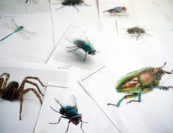 Working from images of flies, spiders, ants, crane flies and beetles in a drawing workshop for ages 6 to 10. By Paula Briggs director of AccessArt and author of Drawing Projects for Children (Black Dog Publishing)