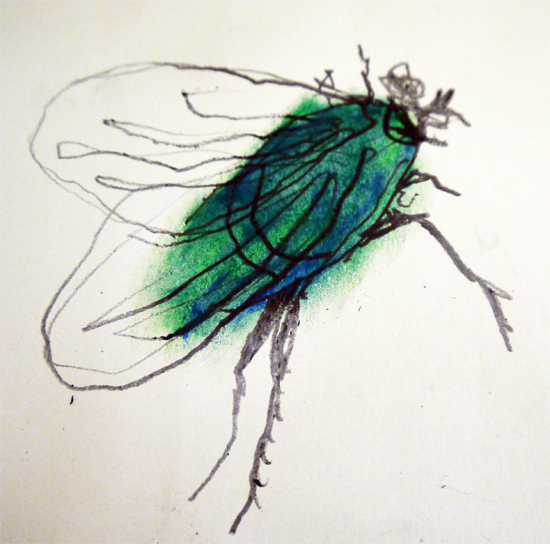 Drawing Minibeasts Using A Continuous Line And Graphite Oil Pastel