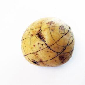 Contour Lines Drawn on a Potato