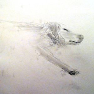 Teenagers are challenged to draw a live subject that keeps moving!   They are encouraged to make large drawings using a variety of variety of media and to experiment with mark making and gesture.  They learn to adopt a flexible approach to their drawings, as the dog continues to change his position.