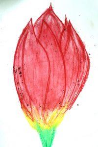 Tulip by Daisy