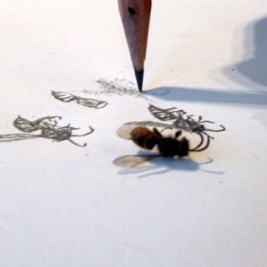 Teenagers from AccessArt's Experimental Drawing Class, experimented with using an H pencil to draw insects with Sheila Ceccarelli.
