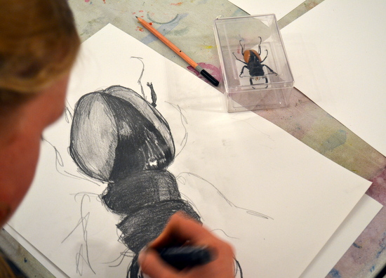 Student Drawing 'Stag Beetle' from the University Museum of Zoology Handling Collection