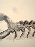 Drawing of a 'Scorpion' from the University Museum, Cambridge, Handling Collection