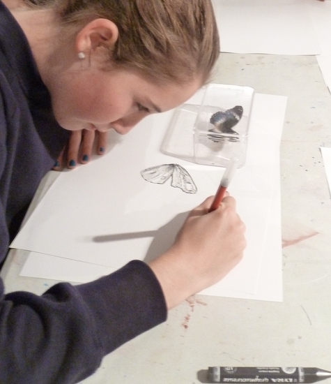 Students drawing an 'Exotic Butterfly'  from University Museum of Zoology, Insect Room, Handling Collection