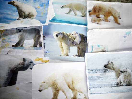 Images of bears as starting points
