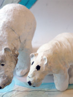 Polar bears at Bourn Primary Academy