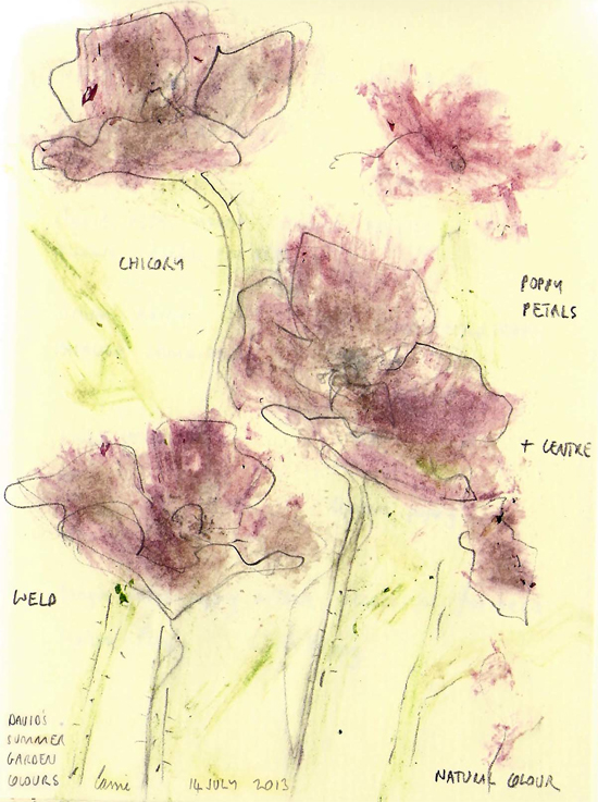 By Cassie Herschel-Shorland, Drawing made with plant pigment