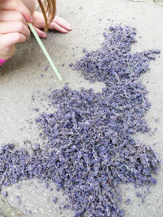 Drawing of the UK, made with lavender flowers by blowing through a straw!