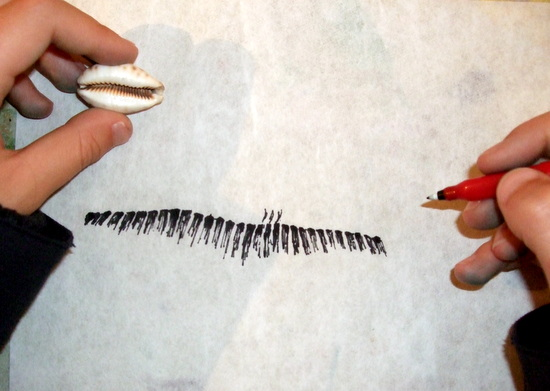 Amy drawing a Lynx Cowry on loan from the University Museum of Zoology, Cambridge