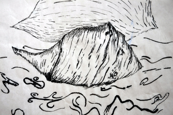Adam draws a European Whelk on loan from the University Museum of Zoology, Cambridge in black ink with a feather