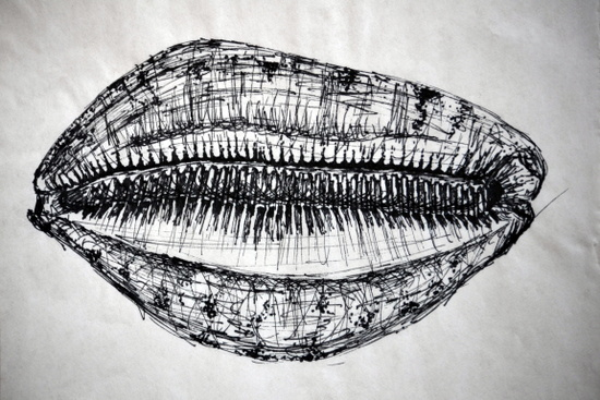 Amy's Lynx Cowry on loan from the University Museum of Zoology, Cambridge in black pen from Pisces