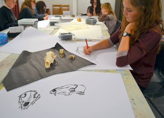 Experimental Drawing Class drawing skulls on loan from the University Museum of Zoology, Cambridge