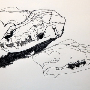 Finished study of a Dog Skull by Kitty, aged 11