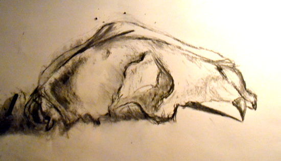 Drawing skulls: Ella's study of a Dog Skull in charcoal in candle light