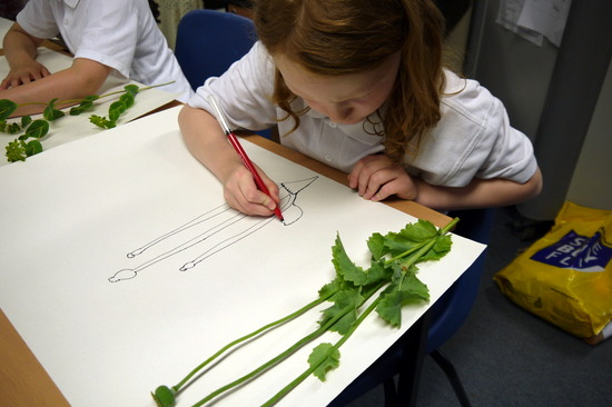Further Guidance to Support Drawing in Schools