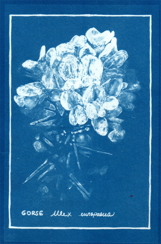 Maru shares the beautiful process of cyanotype. The project can be adapted to any theme and works well with teenagers and adults, resulting in stunning images.