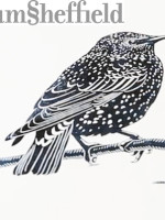 James Green: An Introduction to Lino Cutting Printmaking