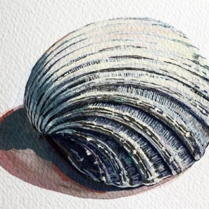 Artist Educator, Emma Copley demonstrates in this beautifully illustrated resource, a step-by-step method for producing a painting of a shell, or similar object, in gouache.