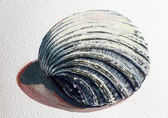 In this beautifully illustrated resource, Emma demonstrates how she teaches a step-by-step method for producing a painting of a shell, or similar object in gouache.