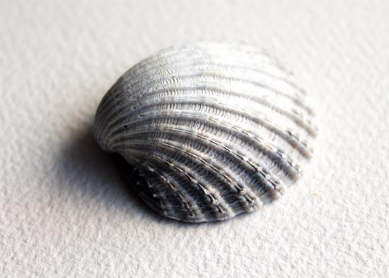 painting a still life - Shell Subject Matter