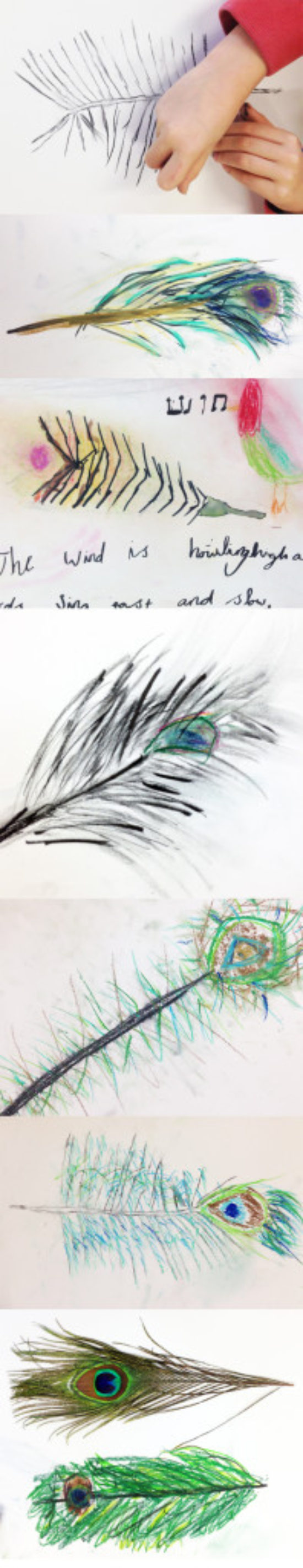 Drawing Feathers: Drawing Challenge
