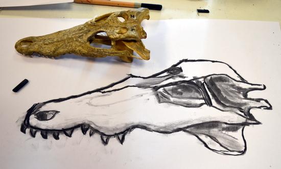 Scott's caiman skull