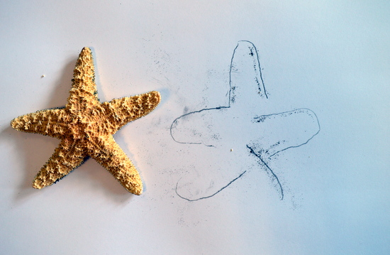 Observational drawing of a starfish