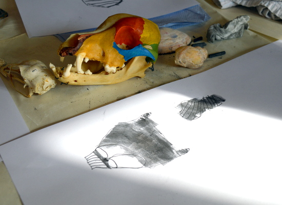 Observational drawing of a dog skull