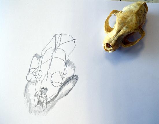 Gemma's contour drawing of a cat skull