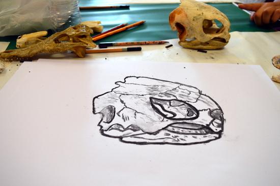 Scott's turtle skull