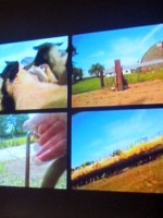 Flock Together video installation
