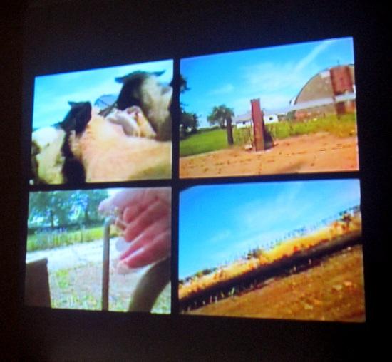 Flock Together video installation