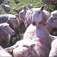 webcam still 2 farmer-cam in field