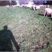 webcam still 3 farmer-cam in field
