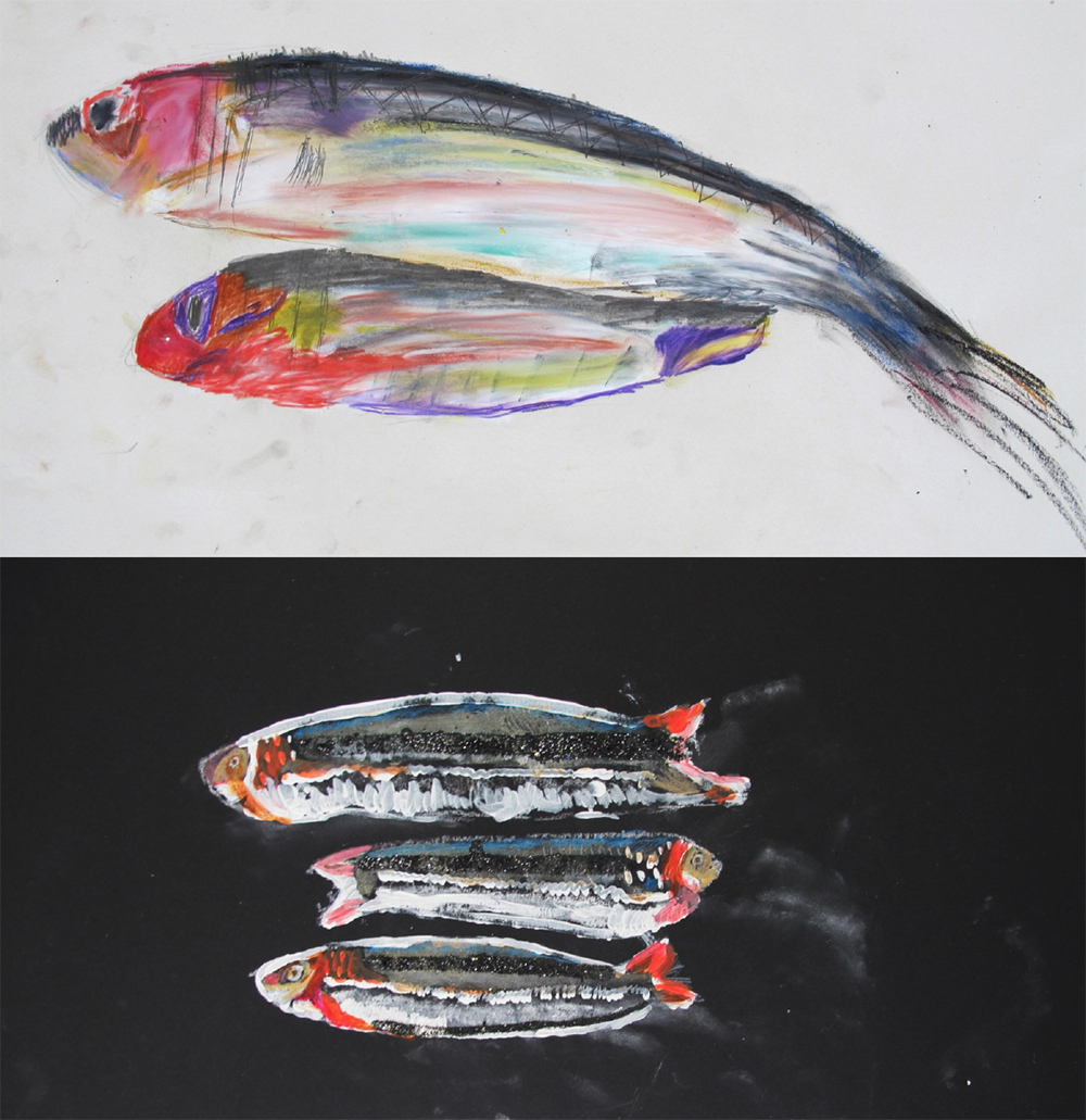 Year 3 Size-A2 Oil pastel and graphite. Studies drawn from direct observation of sardines.