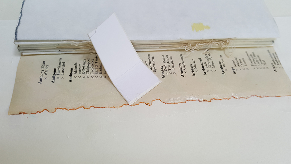 Glue more paper onto the front and back covers, making sure you also cover the spine...