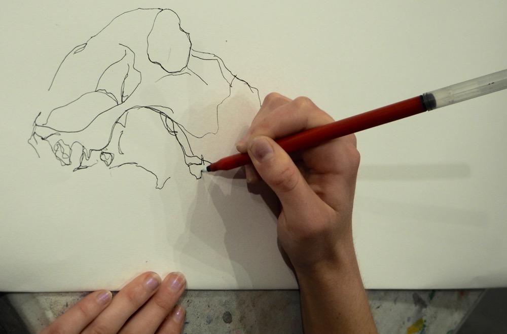 Drawing a Sheep Skull