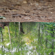 upside down images