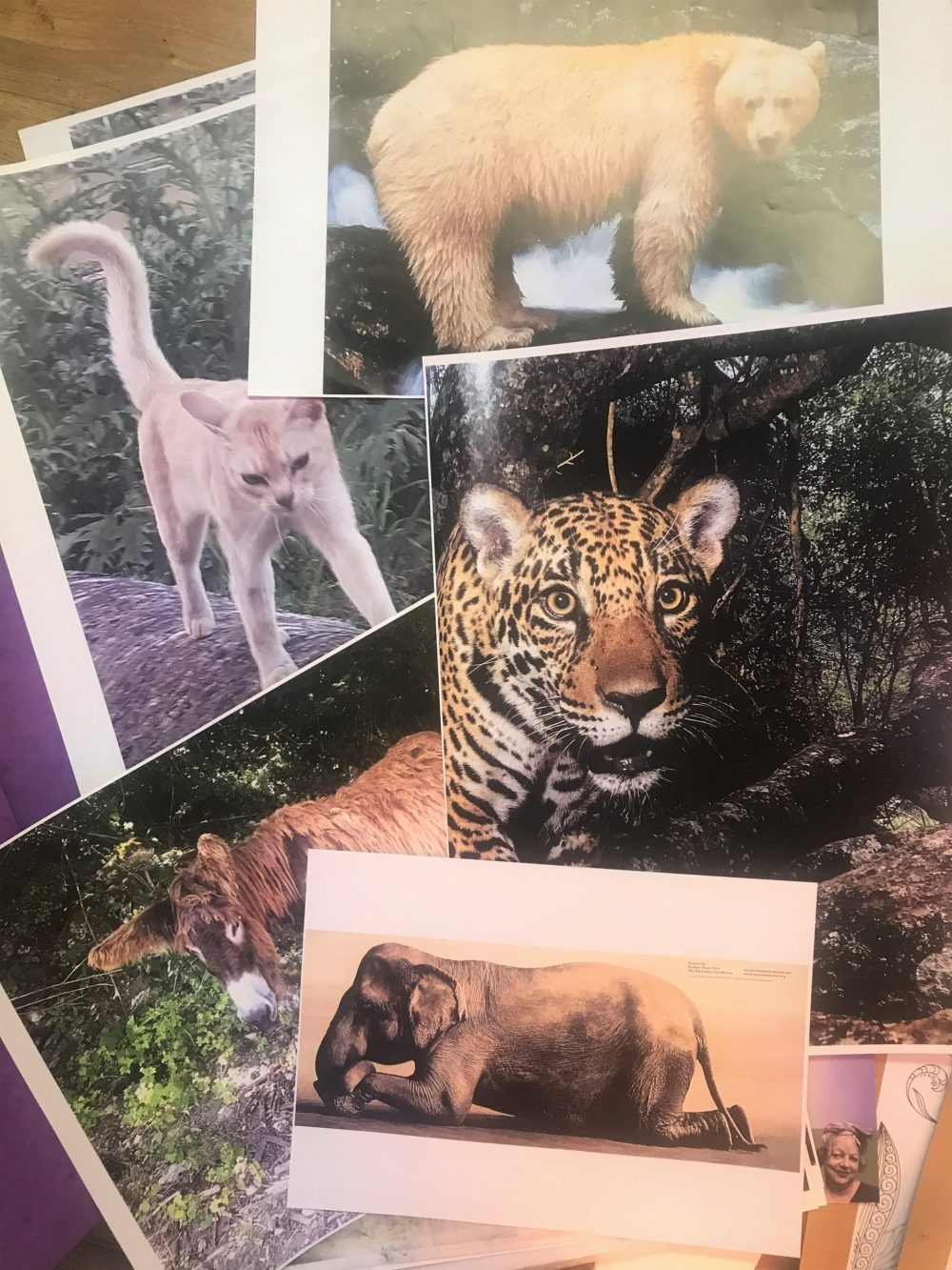 Pictures of animlas were displayed to choose from