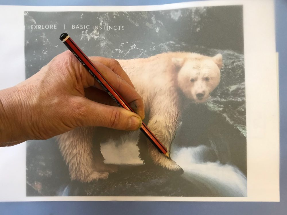 Tracing an image of an animal