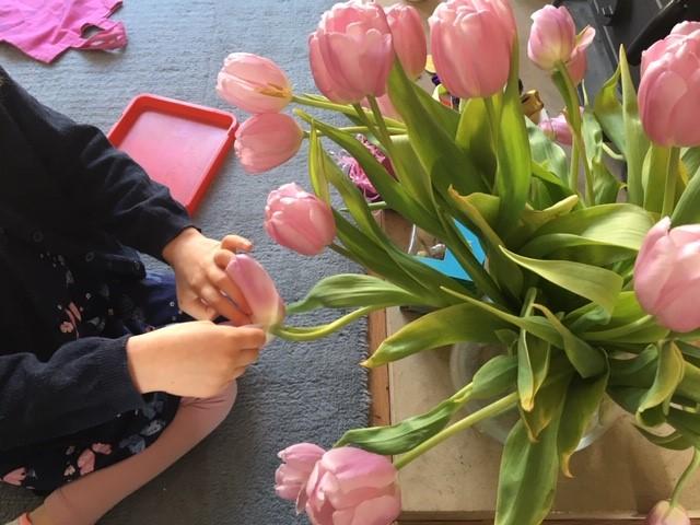 choosing tulips petals