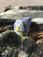 Fragment of mussel shell wedged into a groyne