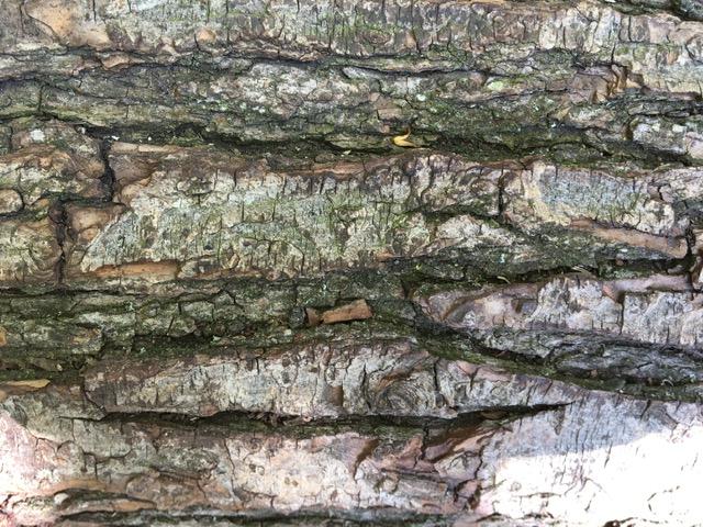 careful looking at natural patterns