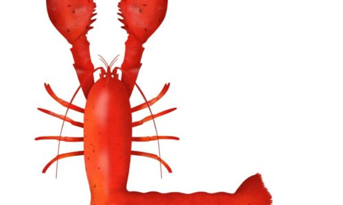 L is for Lobster by Isobel Grant