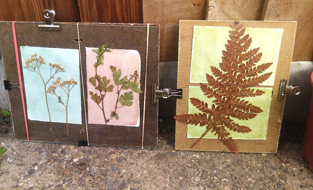 Anthotype Prints Developing in the Sun by Genevieve Rudd
