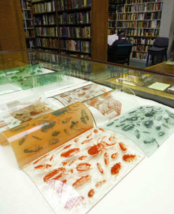 Glass Pages of Insects by Theresa Easton